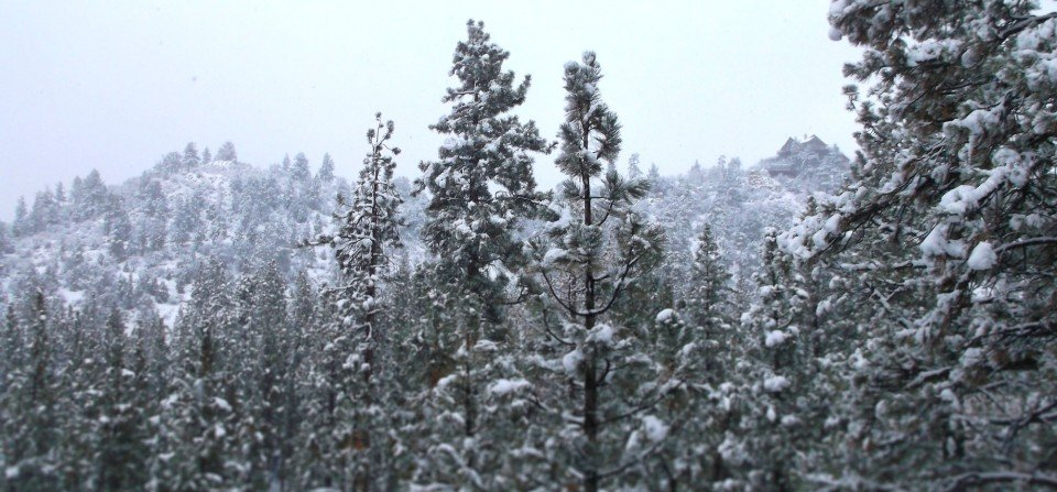 Snowy Forest - Big Bear Real Estate